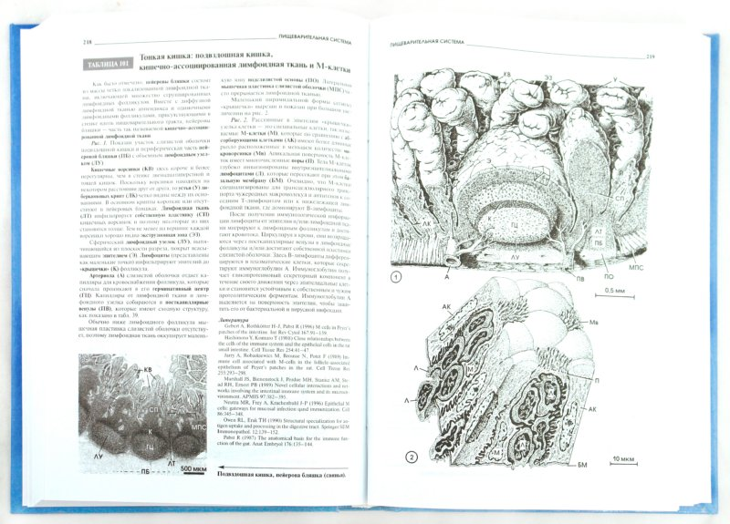 Иллюстрация 1 из 12 для Атлас микроскопической анатомии человека - Радивой Крстич | Лабиринт - книги. Источник: Лабиринт