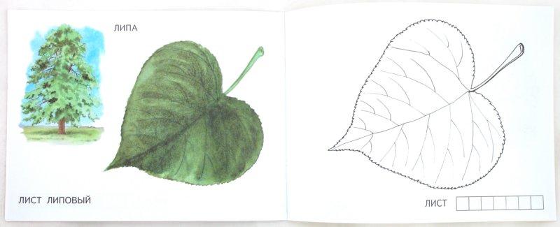 Иллюстрация 1 из 20 для Листья   Лабиринт - книги. Источник: Лабиринт