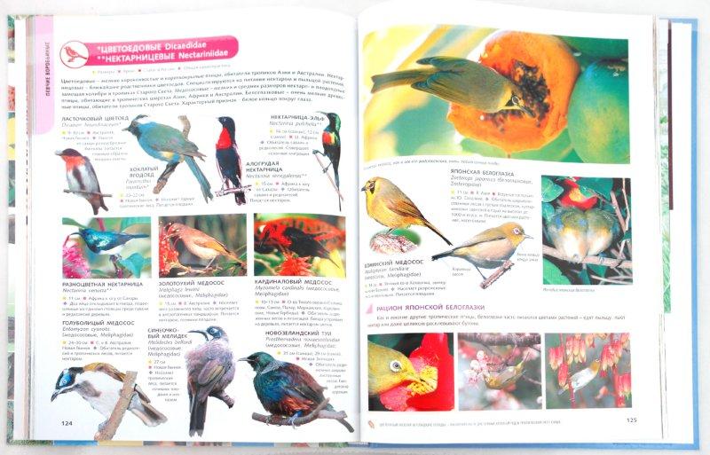 Иллюстрация 1 из 37 для Животные. Лучшие фотографии со всего мира | Лабиринт - книги. Источник: Лабиринт