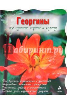 Георгины