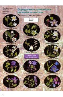 Определитель травянистых растений по цветкам: Раннецветущие растени