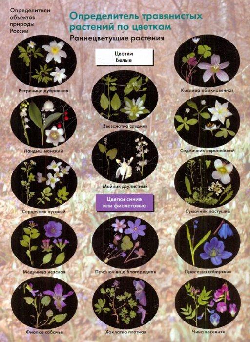 Иллюстрация 1 из 5 для Определитель травянистых растений по цветкам: Раннецветущие растени - Боголюбов, Лазарева, Васюкова | Лабиринт - книги. Источник: Лабиринт