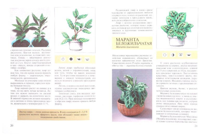 Из 1 для книги декоративно лиственные
