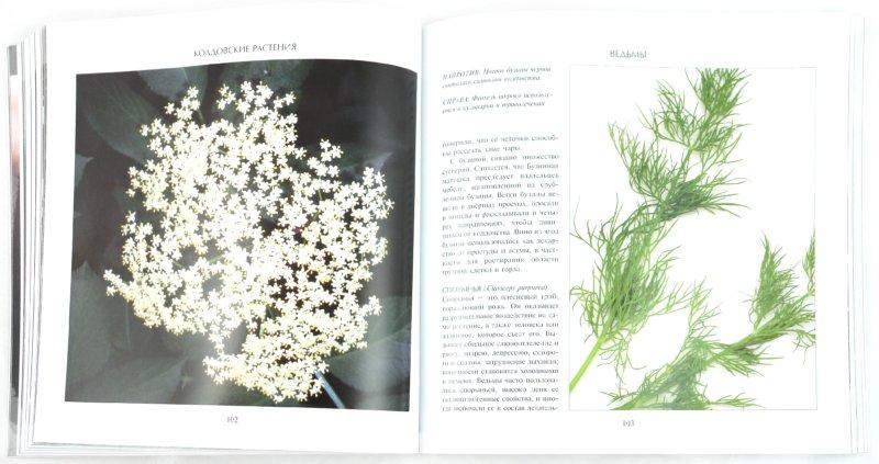 Иллюстрация 1 из 31 для Ведьмы - Кэнвелл, Сазерленд | Лабиринт - книги. Источник: Лабиринт