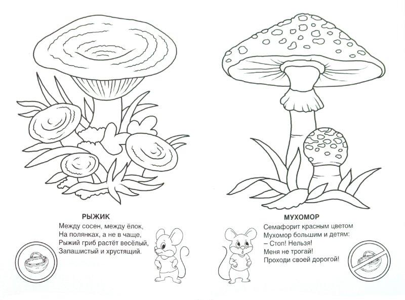 Иллюстрация 1 из 14 для Знаешь ли ты грибы-грибочки? - Елена Михайленко | Лабиринт - книги. Источник: Лабиринт