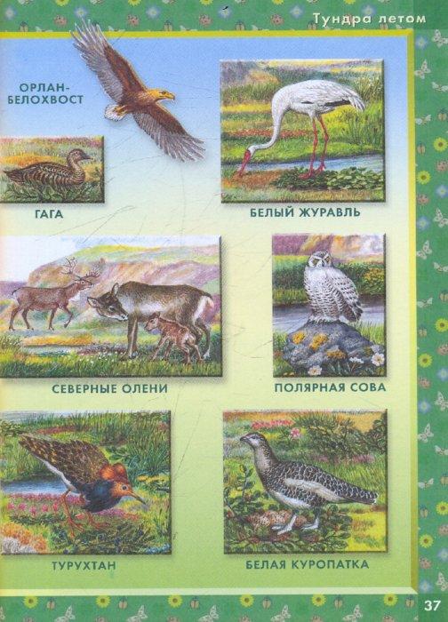 Иллюстрация 1 из 20 для Родная природа: Словарь в картинках | Лабиринт - книги. Источник: Лабиринт