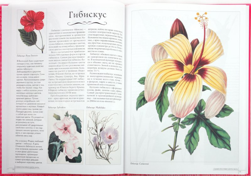 Иллюстрация 1 из 12 для Самые красивые цветы мира - А. Пантилеева | Лабиринт - книги. Источник: Лабиринт