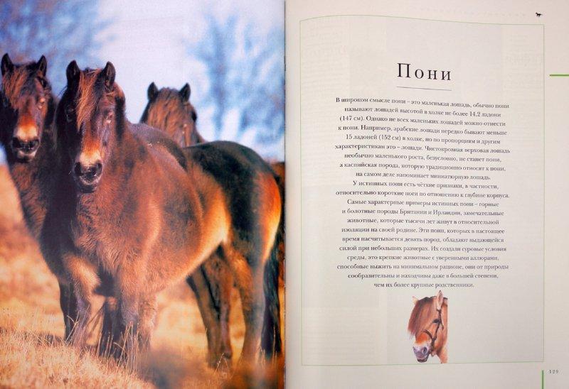 Иллюстрация 1 из 14 для Породы лошадей. Иллюстрированная энциклопедия - Джудит Дрейпер | Лабиринт - книги. Источник: Лабиринт