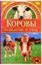 Коровы: разведение и уход