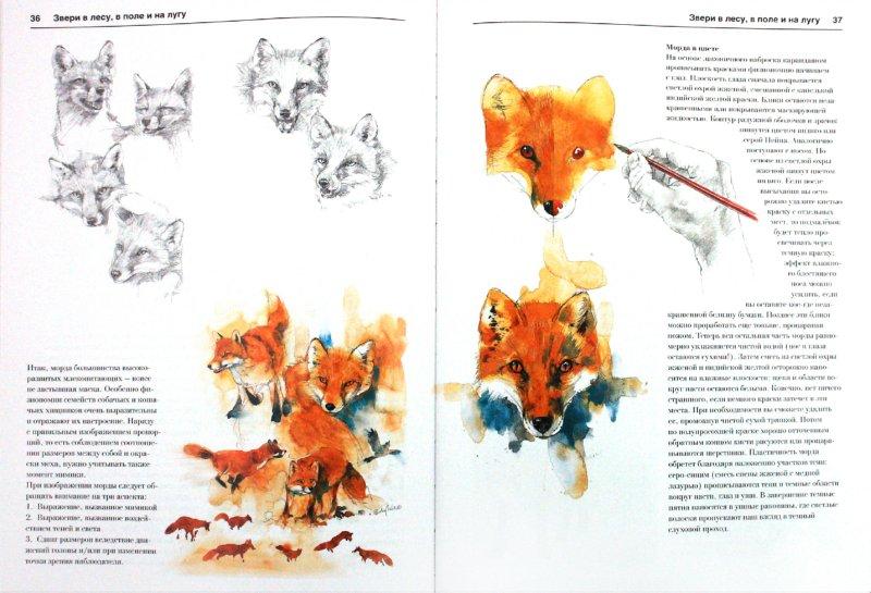 Иллюстрация 1 из 16 для Животные и птицы. Акварель - Бодо Майер | Лабиринт - книги. Источник: Лабиринт