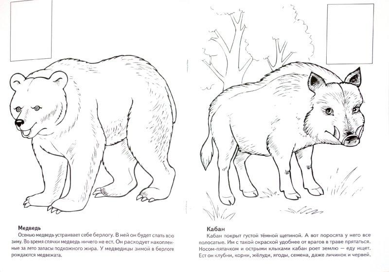 Иллюстрации к животные европы книжка