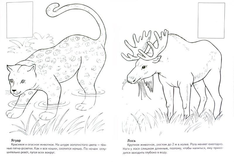 Иллюстрация 1 из 1 для книги животные