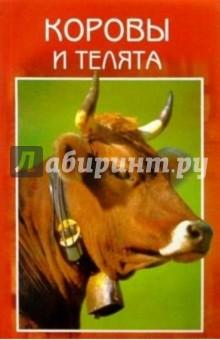 Коровы и телята. Разведение. Выращивание