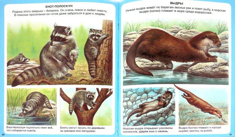 Иллюстрация 1 из 23 для Животные   Лабиринт - книги. Источник: Лабиринт