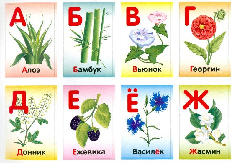 Цветы комнатные в алфавитном порядке с
