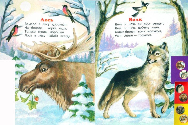 Иллюстрация 1 из 7 для Лесные животные - Владимир Степанов   Лабиринт - книги. Источник: Лабиринт