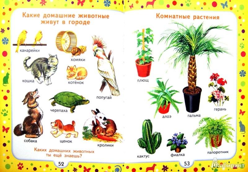 Иллюстрация 1 из 28 для Моя первая книга. Энциклопедия для малышей от 6 месяцев для родителей и воспитателей - Алла Максимова | Лабиринт - книги. Источник: Лабиринт