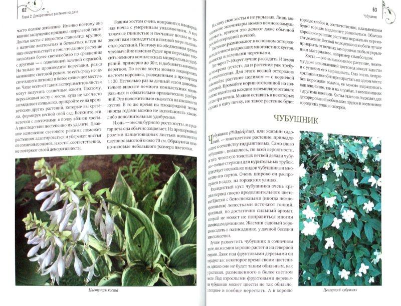 Иллюстрация 1 из 8 для Садовые цветы: выбираем, ухаживаем, наслаждаемся - Николай Азарушкин   Лабиринт - книги. Источник: Лабиринт
