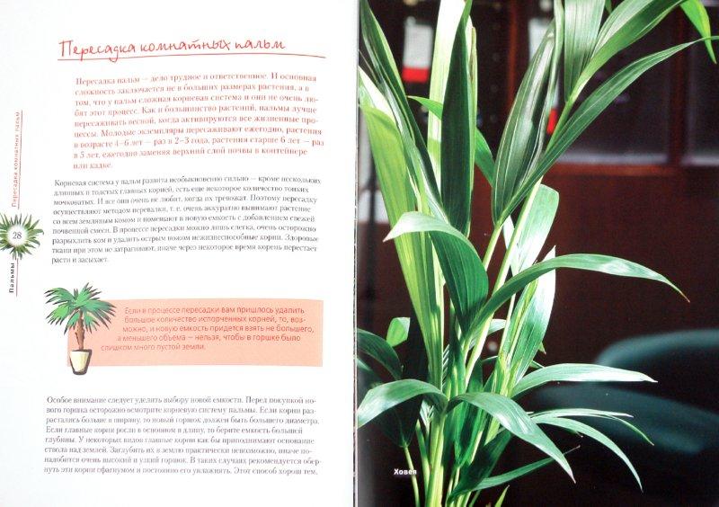 Виды пальмовых растений