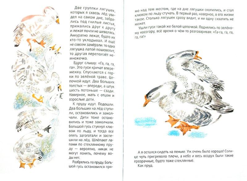 Иллюстрация 1 из 40 для Маленькие рассказы про животных - Сергей Образцов | Лабиринт - книги. Источник: Лабиринт