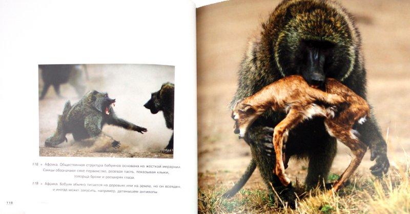 Иллюстрация 1 из 8 для Дикая природа - Гуаита, Банфи, Барделли | Лабиринт - книги. Источник: Лабиринт