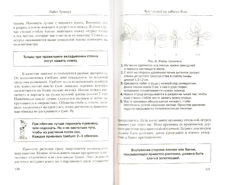 Иллюстрация 1 из 10 для Чудесный огород - Павел Траннуа | Лабиринт - книги. Источник: Лабиринт