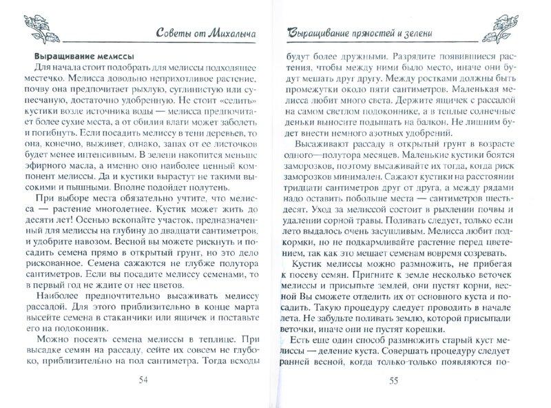 Иллюстрация 1 из 8 для Пряные травы. Сажаем, выращиваем, заготавливаем, лечимся - Николай Звонарев | Лабиринт - книги. Источник: Лабиринт