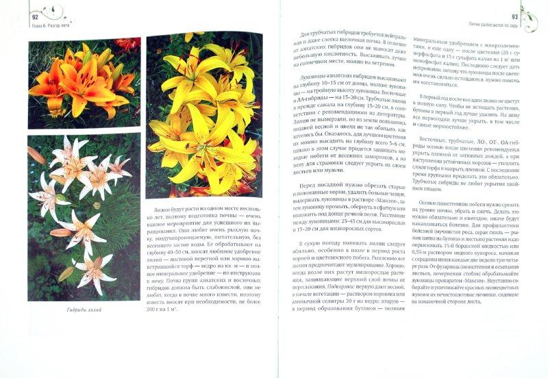 Иллюстрация 1 из 11 для Садовые цветы от снега до снега - Любовь Бобровская | Лабиринт - книги. Источник: Лабиринт
