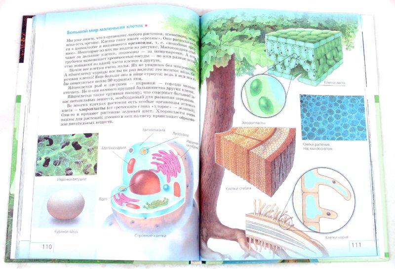 Иллюстрация 1 из 8 для Природоведение. 5 класс (+CD) - Плешаков, Сонин | Лабиринт - книги. Источник: Лабиринт