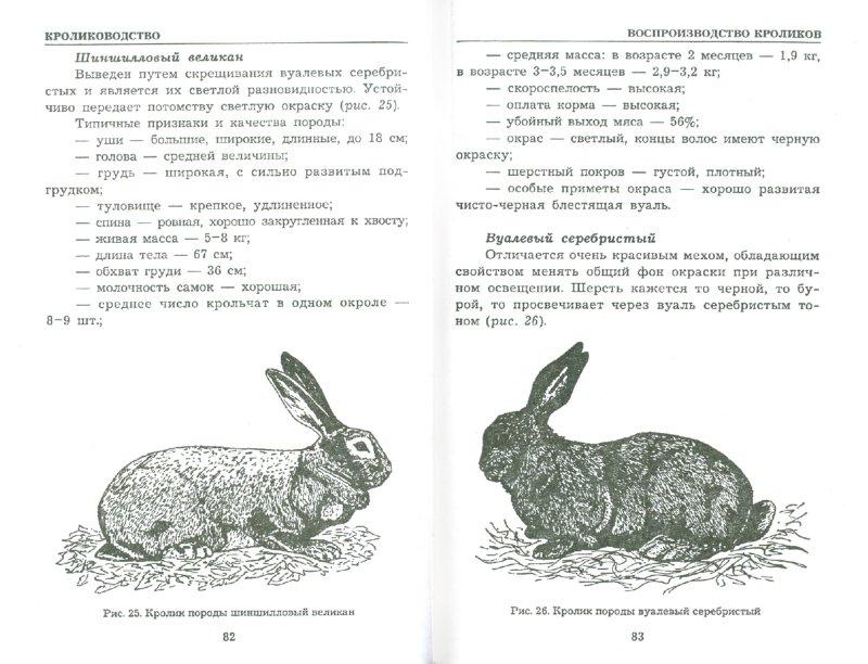 Иллюстрация 1 из 4 для Кролиководство. Разведение и уход - А.Н. Шабанов | Лабиринт - книги. Источник: Лабиринт