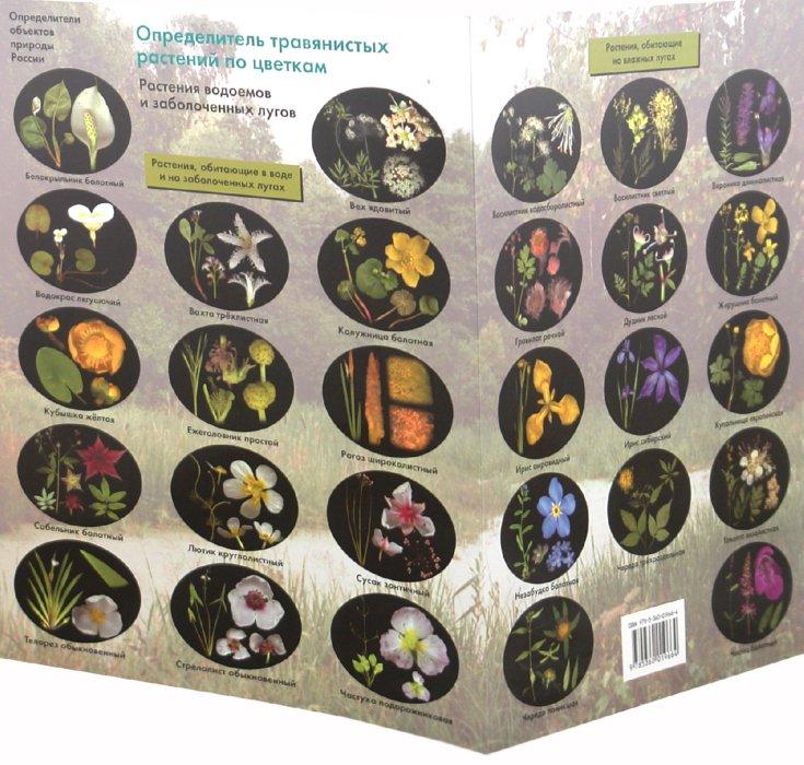 Иллюстрация 1 из 4 для Определитель травянистых растений по цветкам. Растения водоемов и заболоченных лугов - Боголюбов, Жданова, Лазарева, Васюкова   Лабиринт - книги. Источник: Лабиринт