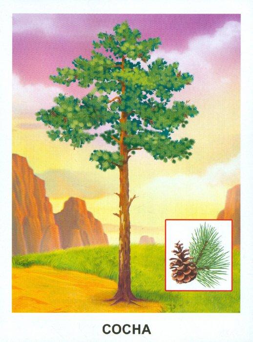 Иллюстрация 1 из 16 для Обучающие карточки. Деревья | Лабиринт - книги. Источник: Лабиринт