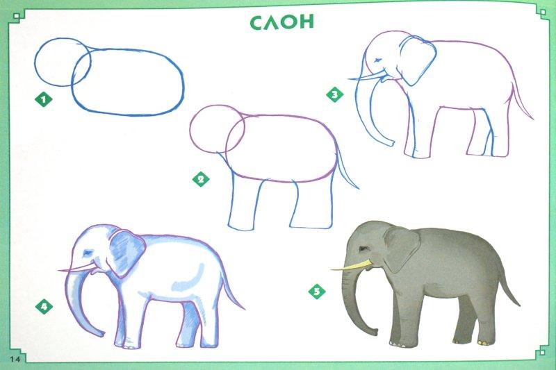 Учиться рисовать слона