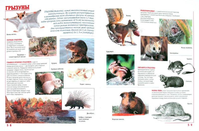 Иллюстрация 1 из 22 для Самая иллюстрированная энциклопедия для девочек | Лабиринт - книги. Источник: Лабиринт