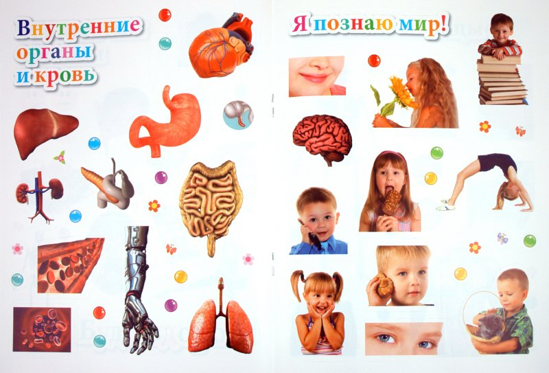 Иллюстрация 1 из 14 для Тело человека | Лабиринт - книги. Источник: Лабиринт