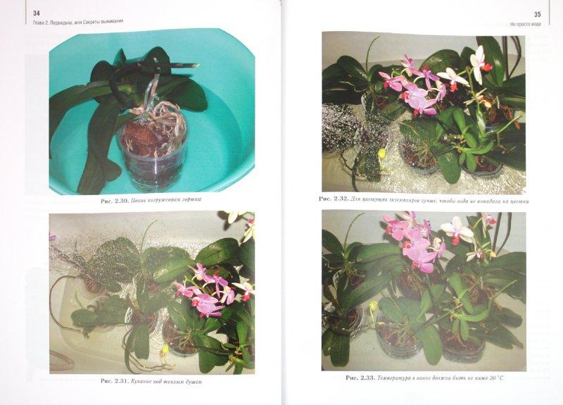 Иллюстрация 1 из 6 для Орхидеи: выбираем, ухаживаем, наслаждаемся - Лариса Петровская | Лабиринт - книги. Источник: Лабиринт
