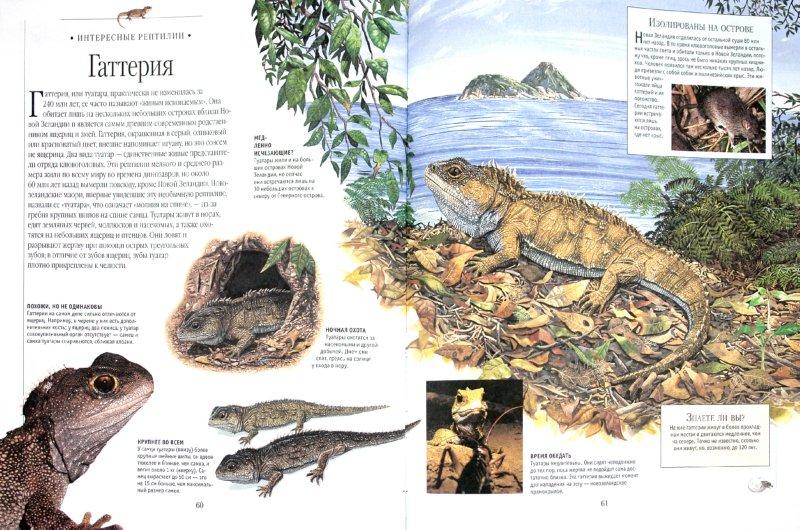 Иллюстрация 1 из 12 для Самая красивая энциклопедия животных | Лабиринт - книги. Источник: Лабиринт