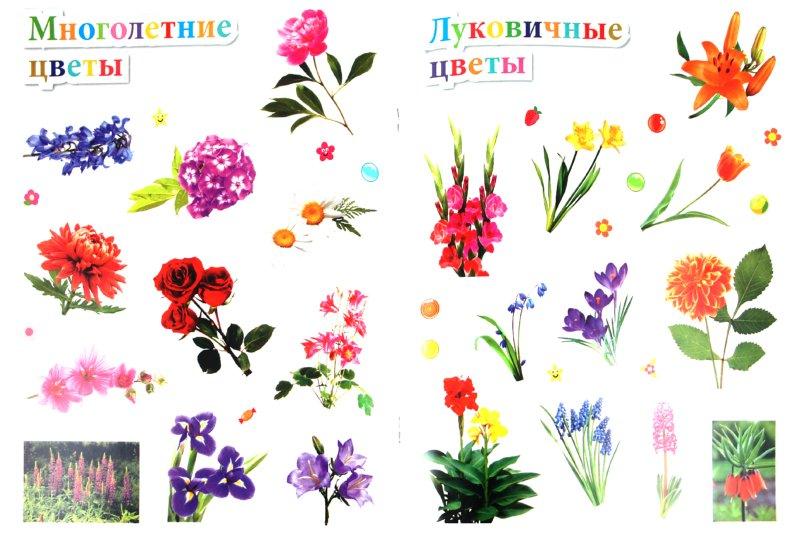 Иллюстрация 1 из 16 для Цветы - Наталья Костина | Лабиринт - книги. Источник: Лабиринт