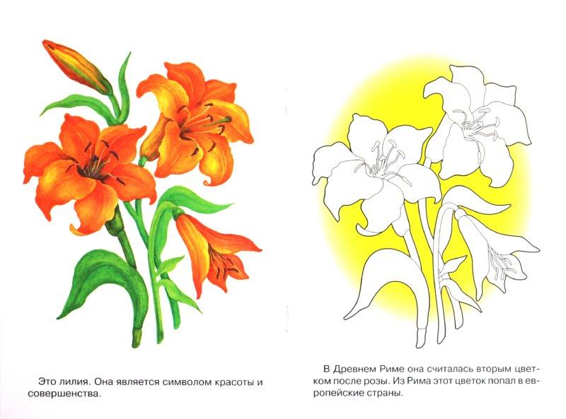 Иллюстрация 1 из 17 для Раскраска. Садовые цветы | Лабиринт - книги. Источник: Лабиринт