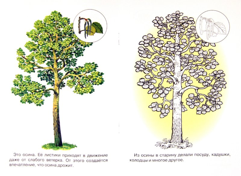 Иллюстрация 1 из 8 для Раскраска. Деревья | Лабиринт - книги. Источник: Лабиринт