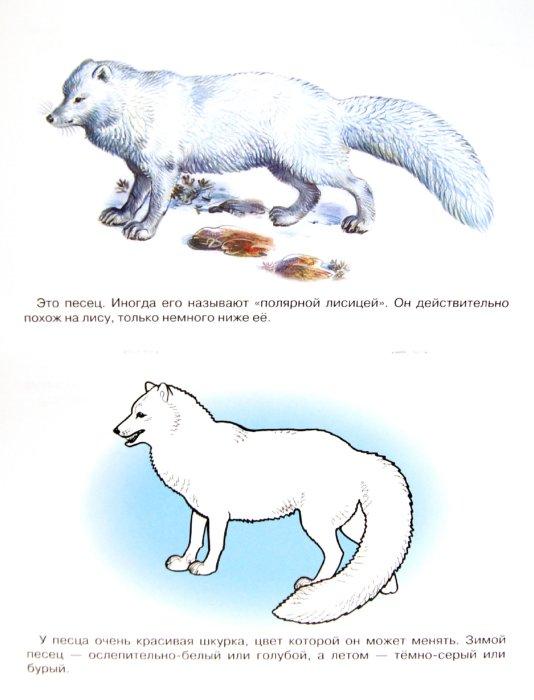 Раскраска животные арктики и