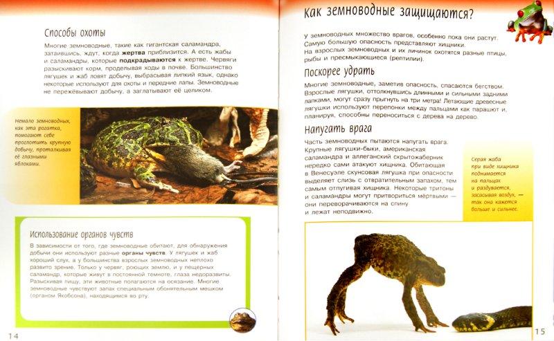 Иллюстрация 1 из 17 для Жизненный цикл земноводных - Спилсбери, Спилсбери   Лабиринт - книги. Источник: Лабиринт