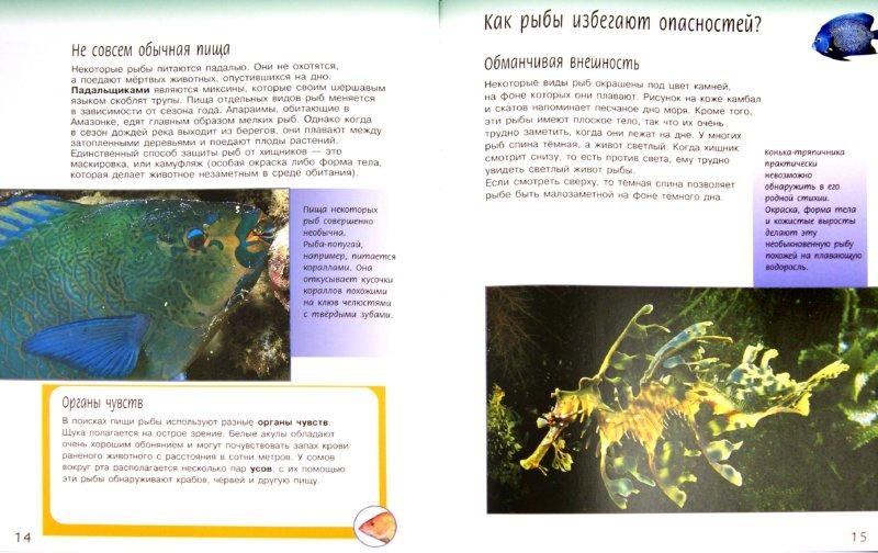 Иллюстрация 1 из 23 для Жизненный цикл рыб - Спилсбери, Спилсбери | Лабиринт - книги. Источник: Лабиринт