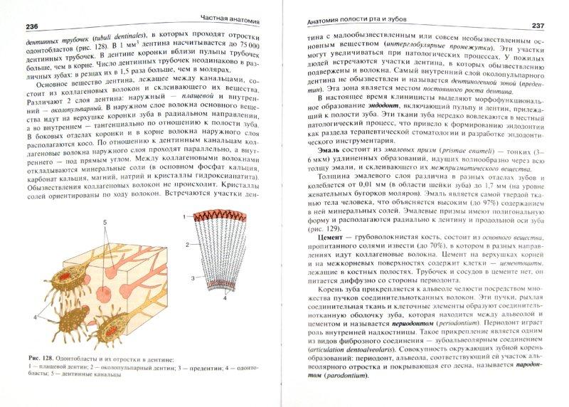 Иллюстрация 1 из 5 для Анатомия человека. В 2-х томах. Том 2 (+CD) - Михайлов, Чукбар, Цыбулькин   Лабиринт - книги. Источник: Лабиринт