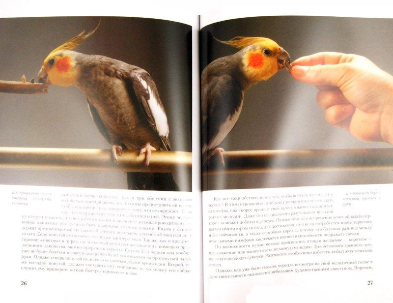 Иллюстрация 1 из 10 для Кореллы. Содержание и уход - Курт Колар   Лабиринт - книги. Источник: Лабиринт