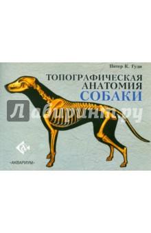 Топографическая анатомия собакиВетеринария<br>Топографическая анатомия собаки содержит 38 страниц с иллюстрациями, включающими более 150 отдельных рисунков. Каждый рисунок подробно пронумерован и снабжен пояснительными надписями; дополнительная информация, помогающая их интерпретации, приведена в тексте. <br>Цель этой книги - ознакомить читателя с основными вопросами анатомии собаки; она создавалась для людей, любящих собак и желающих узнать больше об общем строении их тела. Эта книга будет представлять значительный интерес для владельцев собак, заводчиков, людей, участвующих в выставках, и экспертов. Кроме того, она будет очень полезна для студентов, начинающих изучение курса ветеринарной анатомии. <br>Так как многим читателям, несомненно, никогда не придется увидеть, что внутри у собаки, основное внимание уделено тем анатомическим структурам, которые можно увидеть или прощупать через кожу. Следовательно, поверхностные изображения составляют важный компонент многих рисунков. Ряд других рисунков показывает положение внутренних структур относительно поверхности тела. Позиция и взаимное расположение разнообразных внутренних компонентов сердечнососудистой, пищеварительной, дыхательной и мочеполовой систем показаны в виде проекций на поверхность. <br>Доктор Питер Гуди много лет читал лекции по ветеринарной анатомии в Лондонском Королевском ветеринарном колледже. Он также является автором книги Топографическая анатомия лошади.<br>