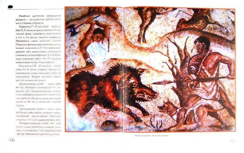 Иллюстрация 1 из 16 для Охота на парнокопытных - Олег Малов | Лабиринт - книги. Источник: Лабиринт