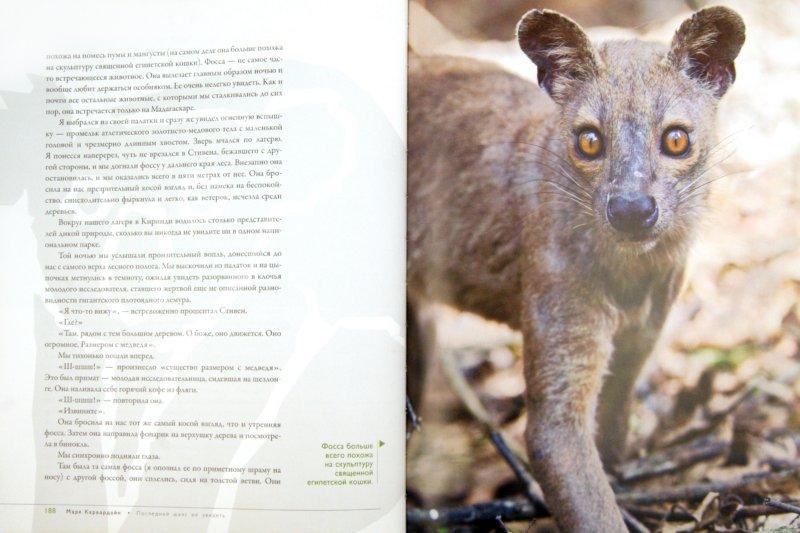Иллюстрация 1 из 16 для Эти уникальные животные. Последний шанс их увидеть - Фрай, Карвардайн | Лабиринт - книги. Источник: Лабиринт