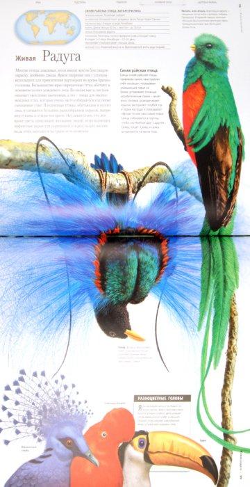 Иллюстрация 1 из 25 для Детская энциклопедия эрудита - Вогт, Дайер, Диксон | Лабиринт - книги. Источник: Лабиринт