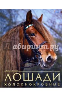 Лошади холоднокровные